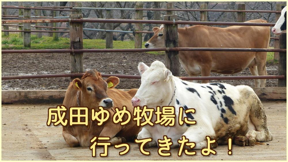 【お出かけ】成田ゆめ牧場に行ってきたよ!でもバタバタな一日に・・・