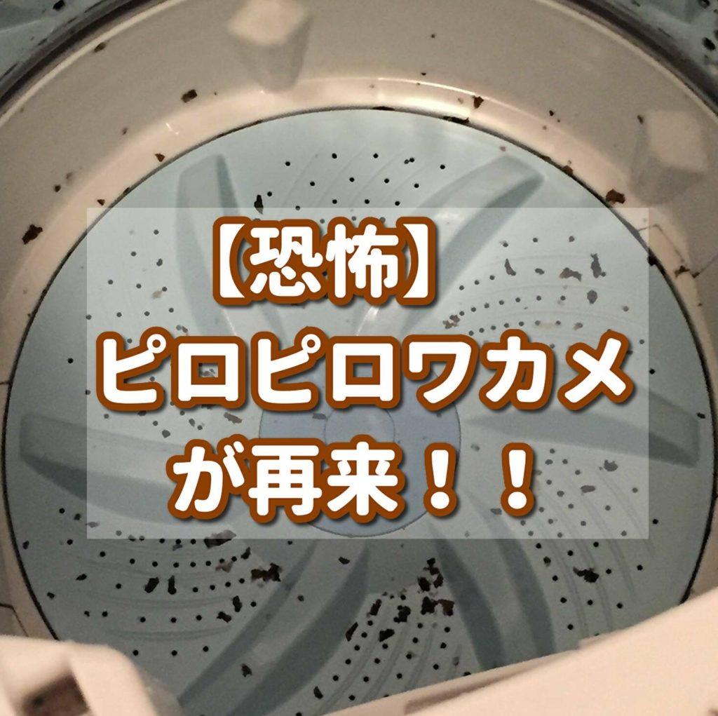 【家事】恐怖!ピロピロワカメの再来!!